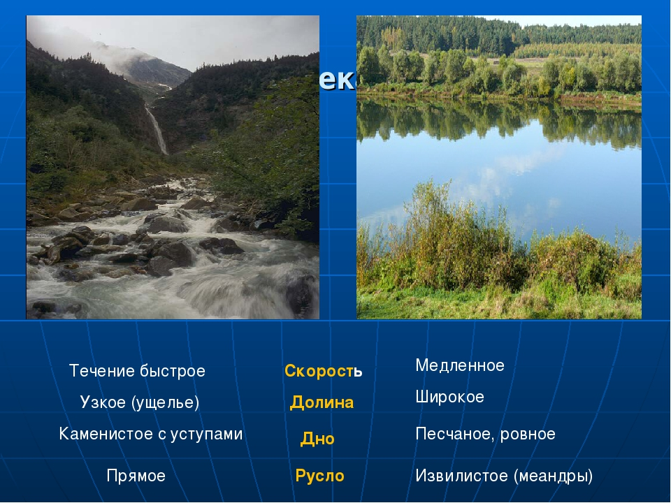 река лена течение быстрое или медленное