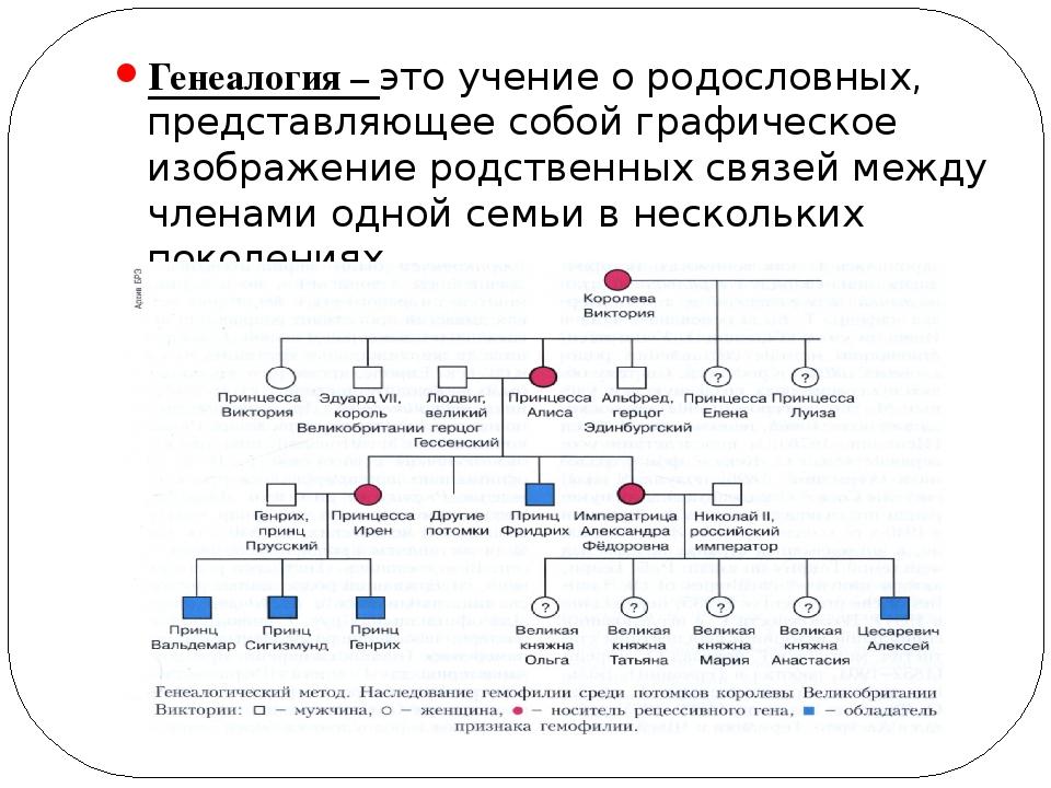 Генеалогия – это учение о родословных, представляющее собой графическое изобр...