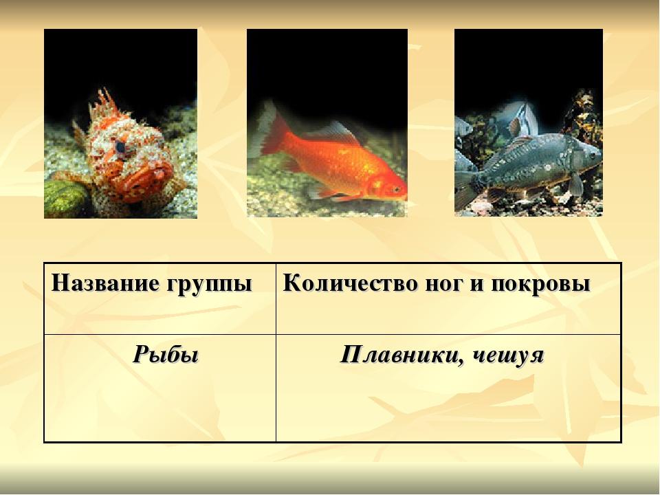 Название группыКоличество ног и покровы Рыбы Плавники, чешуя