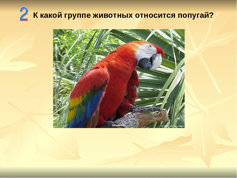 К какой группе животных относится попугай?