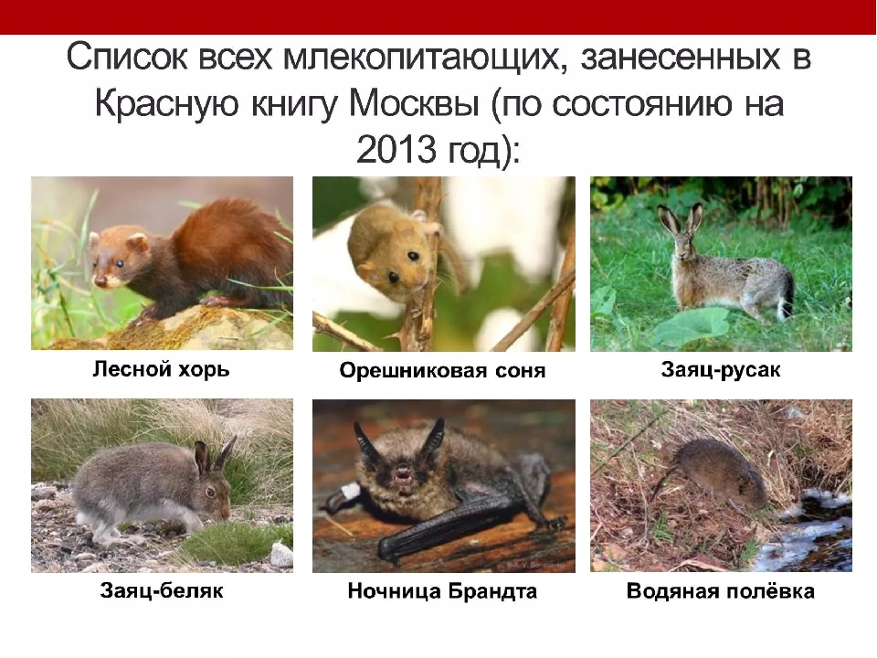 животные красной книги московской области фото и их названия