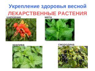 Укрепление здоровья весной ЛЕКАРСТВЕННЫЕ РАСТЕНИЯ шиповник мята крапива сморо