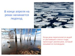 В конце апреля на реках начинается ледоход. Когда река переполняется водой от