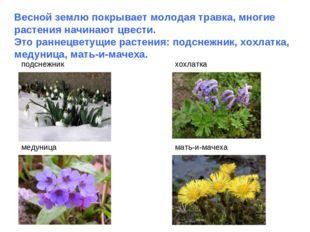 Весной землю покрывает молодая травка, многие растения начинают цвести. Это р