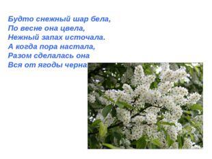 Будто снежный шар бела, По весне она цвела, Нежный запах источала. А когда по