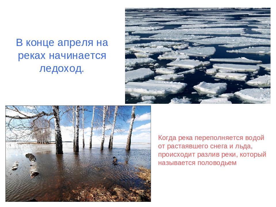 В конце апреля на реках начинается ледоход. Когда река переполняется водой от...