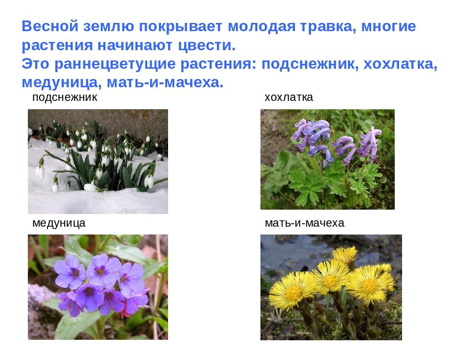 Весной землю покрывает молодая травка, многие растения начинают цвести. Это р...