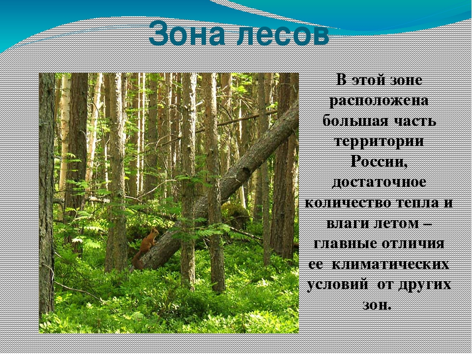 Знакомство с природной зоной лесов