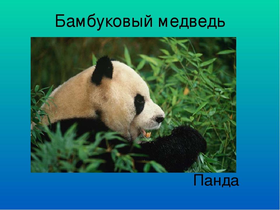 Бамбуковый медведь Панда