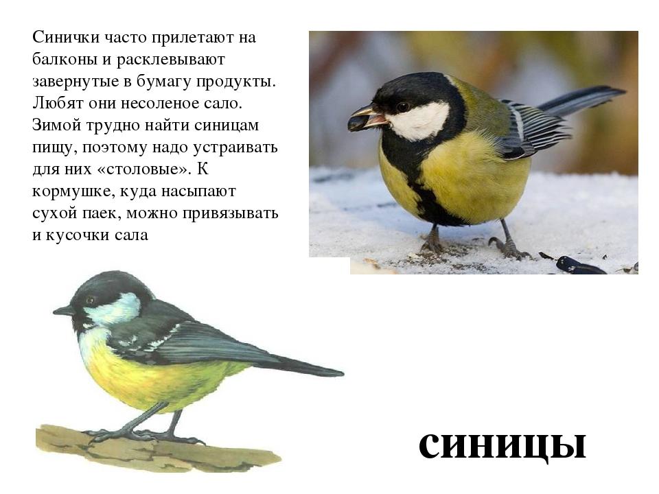 """Презентация по окружающему миру на тему """"птицы: зимующие, ко."""