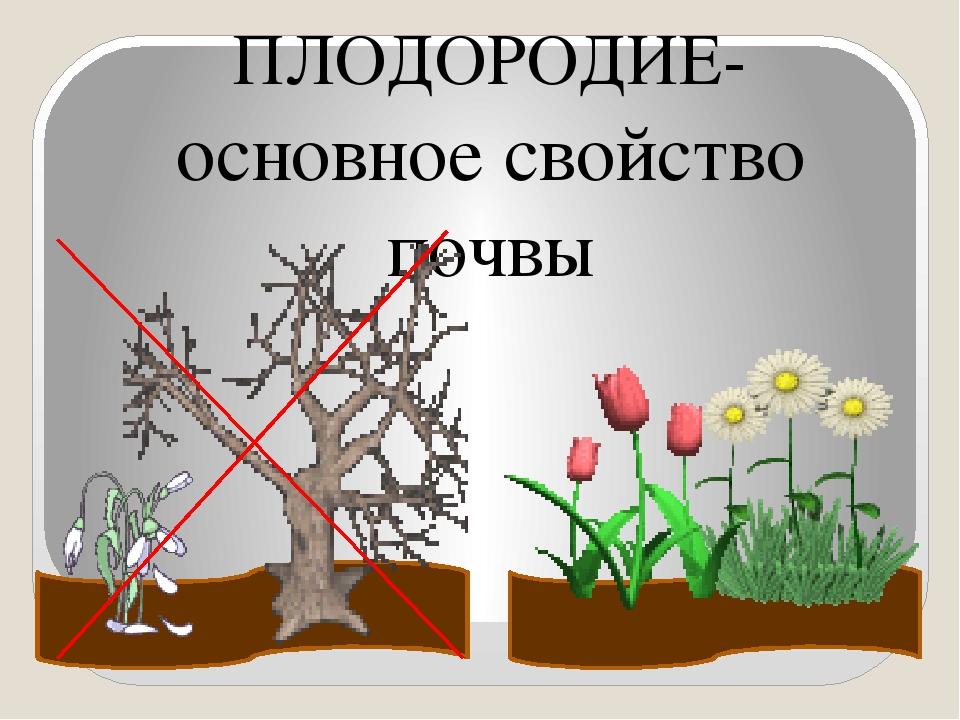 ПЛОДОРОДИЕ- основное свойство почвы