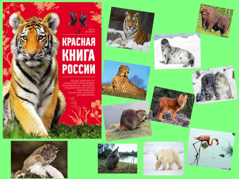 плакат о животных занесенных в красную книгу россии греки почитали