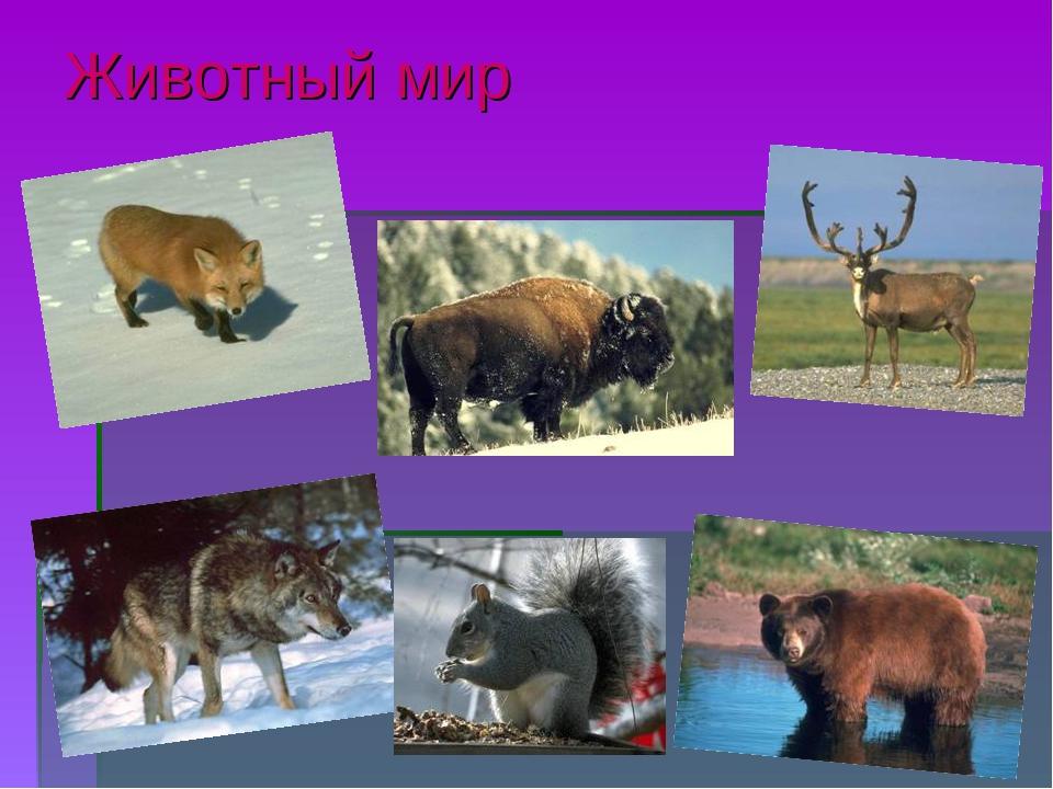 Наурзумский государственный природный заповедник один из старейших заповедников казахстана, был организован в 1931г