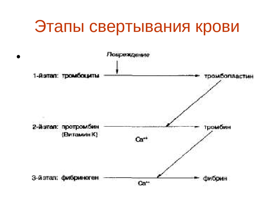 Этапы свертывания крови