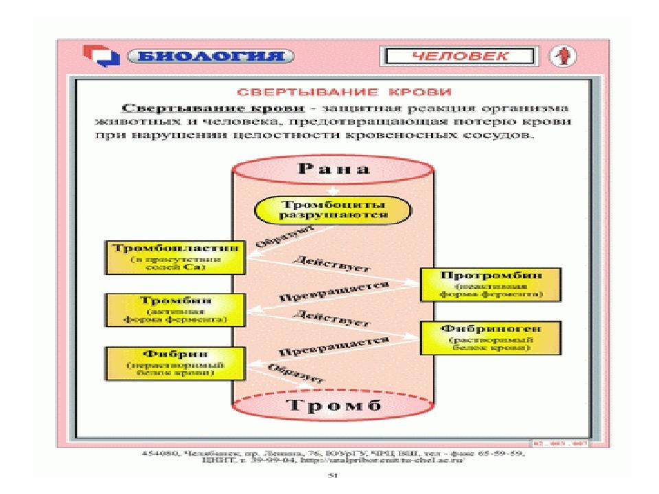 Новая папка (3)\svertyvanie_krovi.gif