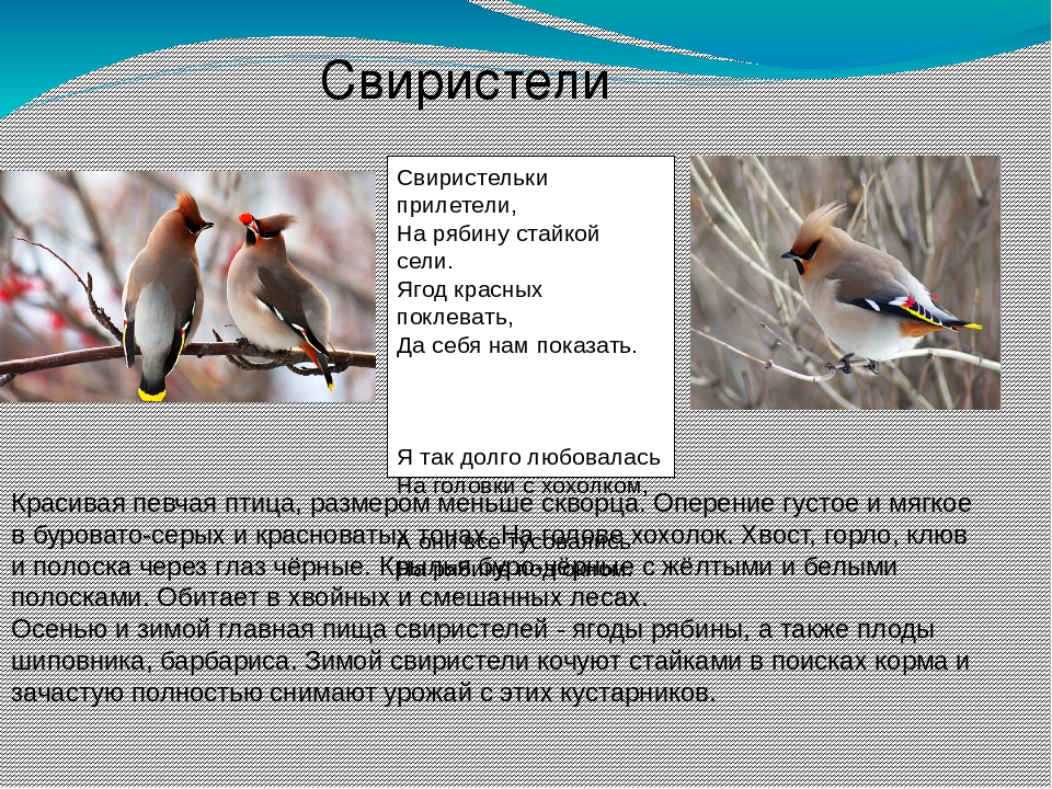 первый птицы зимующие в ярославской области фото с названиями пара мобилки пум