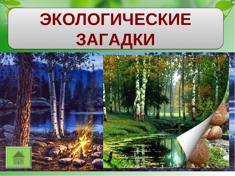 Загадка про экологию с картинками