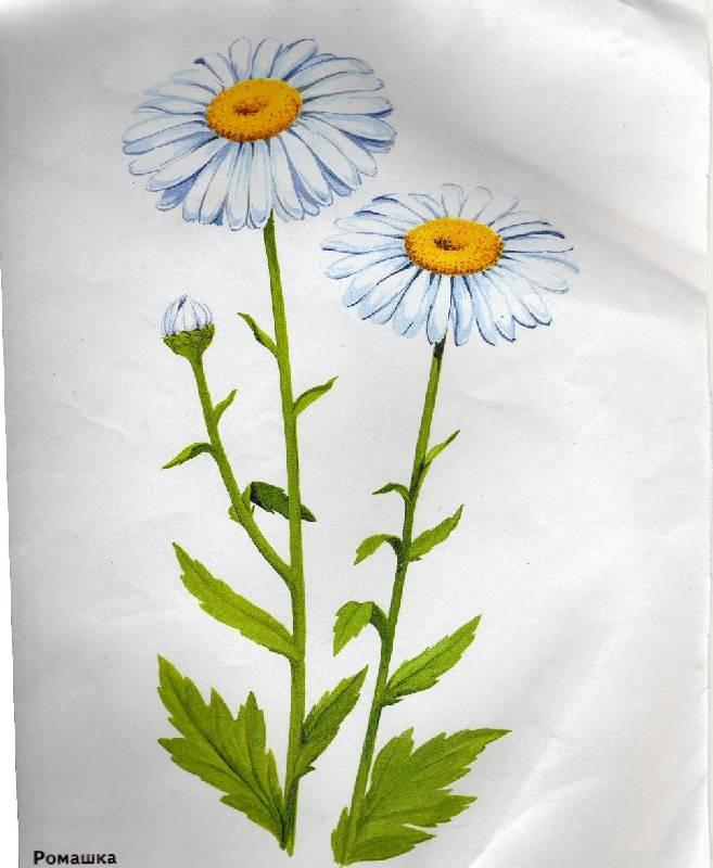 Картинки для детей с цветами
