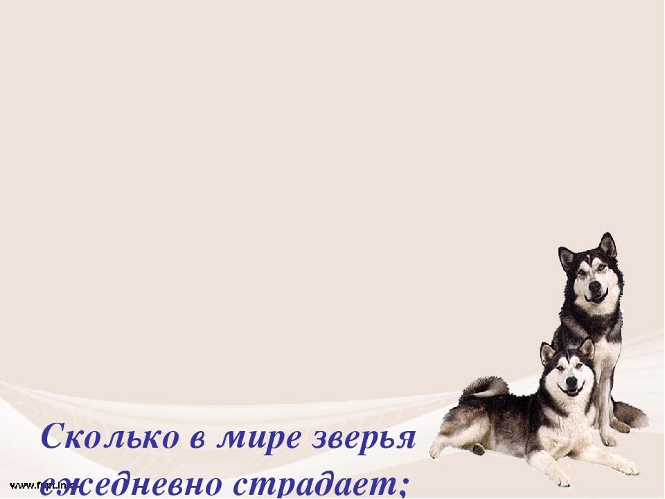 Сколько в мире зверья ежедневно страдает; Гибнет, мёрзнет, дрожит, голодает....