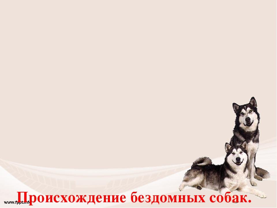 Происхождение бездомных собак. 1 Животные, родившиеся на улице, и никогда не...