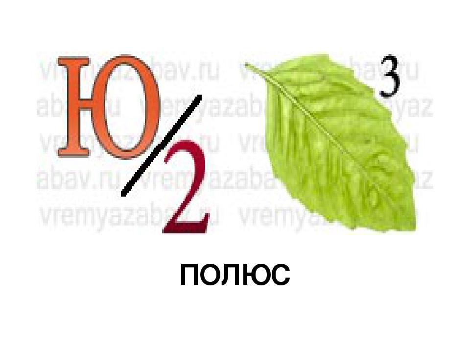 ПОЛЮС