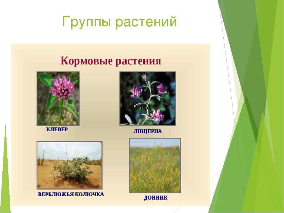 Рассмотри рисунки луговых растений подпиши их