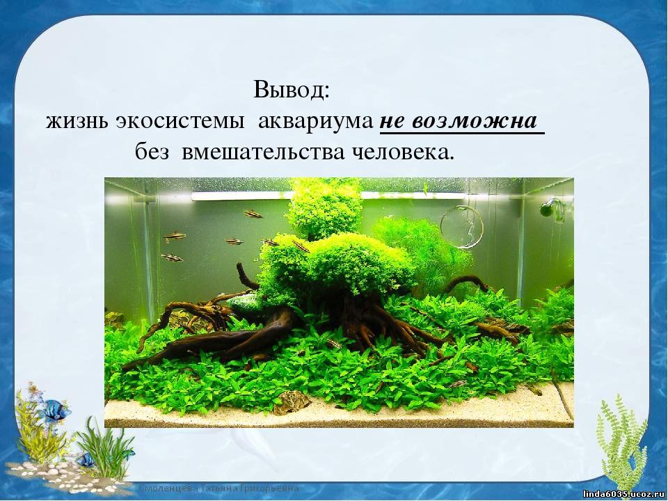 экосистема аквариума картинки штурм зимнего дворца