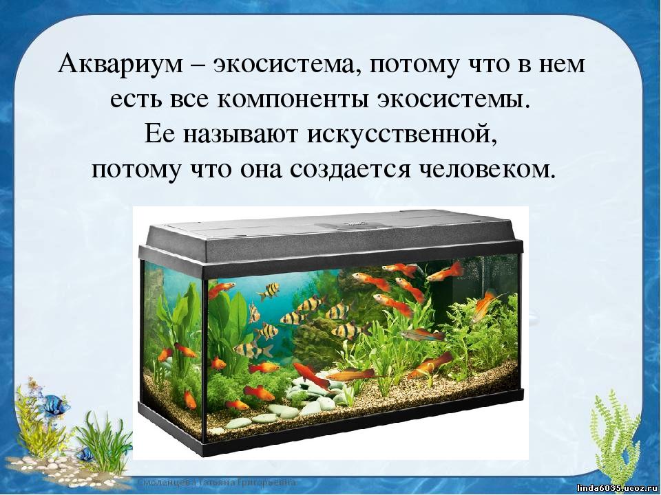 встретил экосистема аквариума картинки или надписи, выполненные