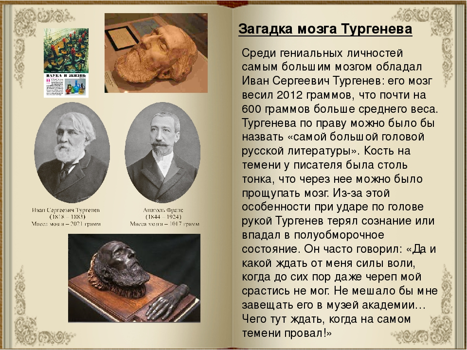 Загадка мозга Тургенева Среди гениальных личностей самым большим мозгом облад...