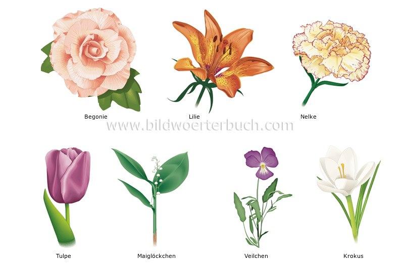 Описание картинки с цветами на английском, картинки которые
