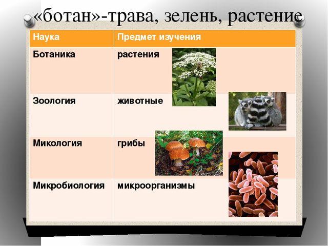 Повторение темы в 6классе царство растений тест