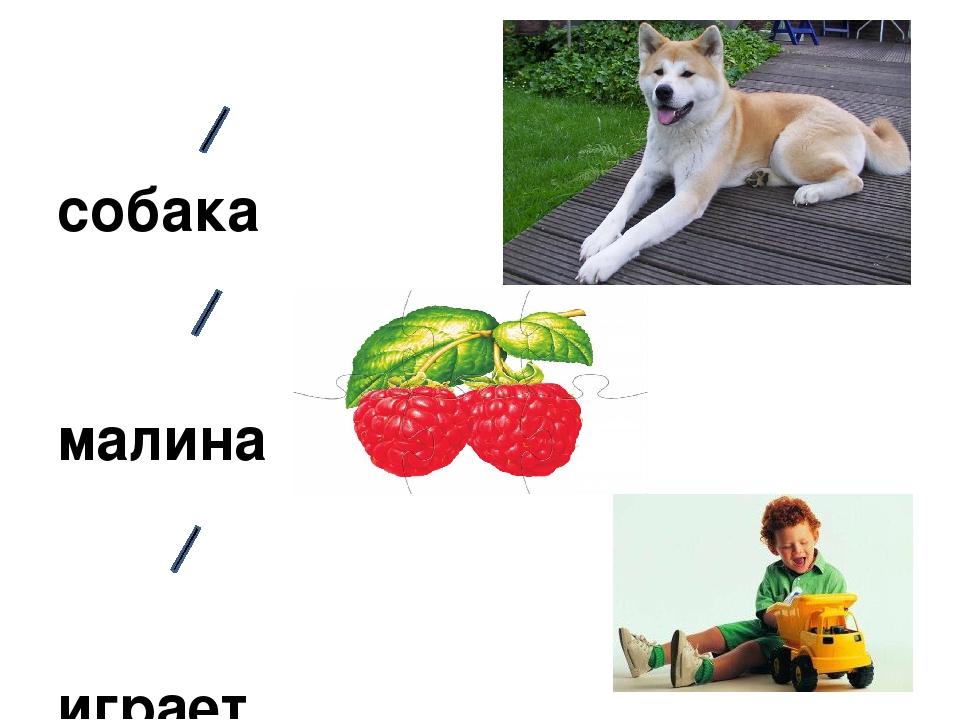 собака малина играет