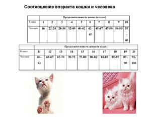 Соотношение возраста кошки и человека Продолжительность жизни (в годах) Кош