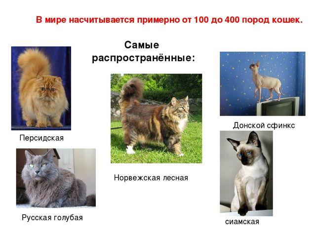 В мире насчитывается примерно от 100 до 400 пород кошек. Самые распространённ...