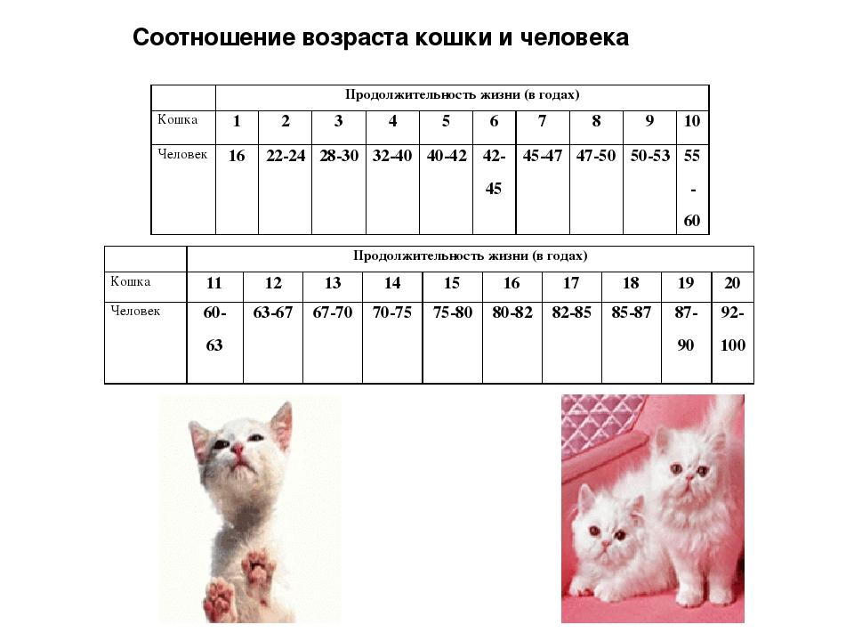 Соотношение возраста кошки и человека Продолжительность жизни (в годах) Кош...