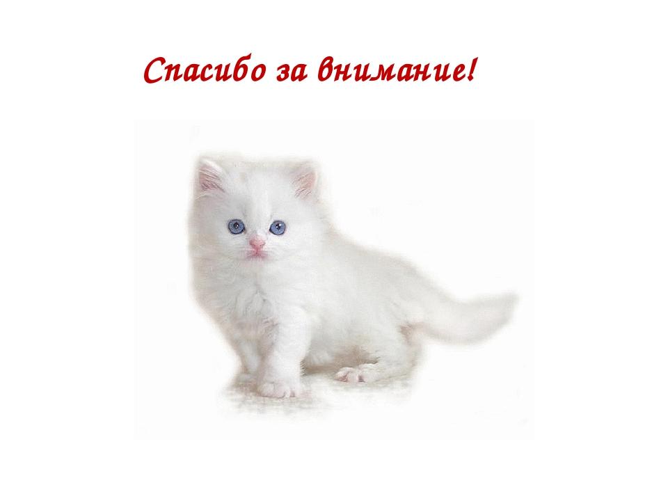 продаже картинки котики презентация силу