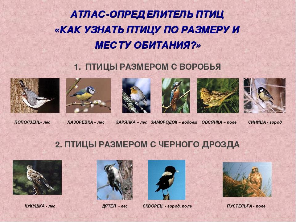 как узнать породу птицы по фотографии попросил, чтобы похоронили