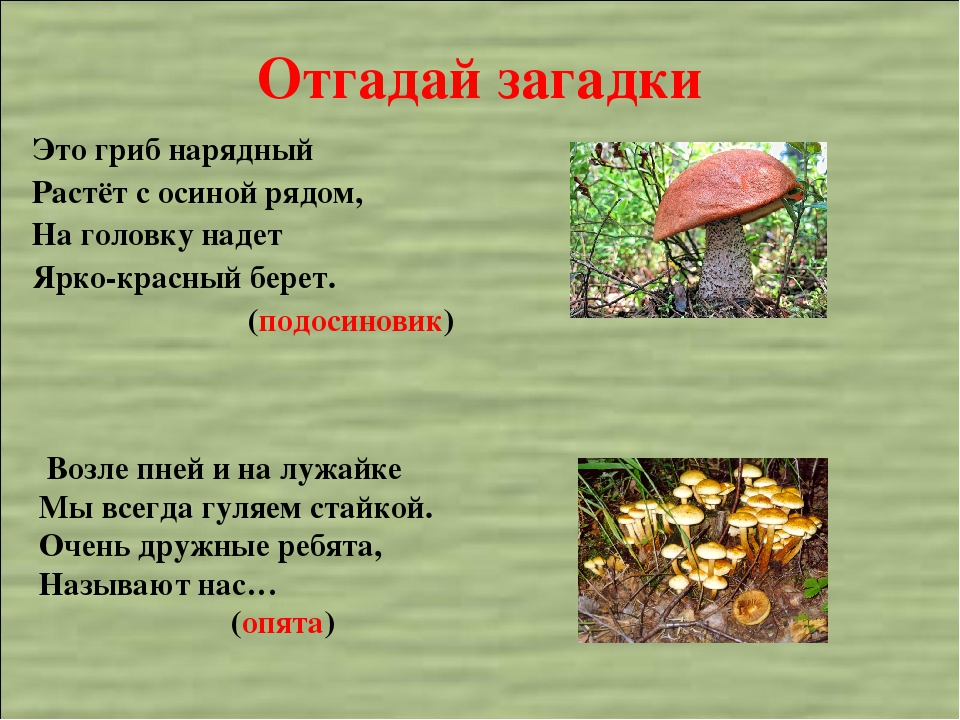 Загадки о грибах картинки