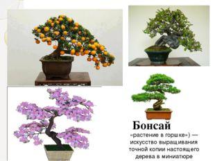 «растение в горшке»)— искусство выращивания точной копии настоящего дерева в
