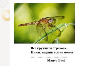 Все кружится стрекоза… Никак зацепиться не может ……………………………  Мацуо Басё