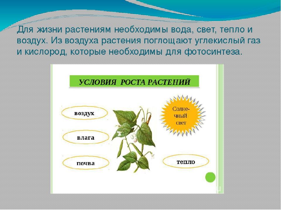 Картинка развития растения