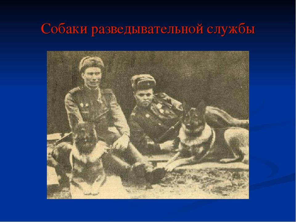 Собаки разведывательной службы