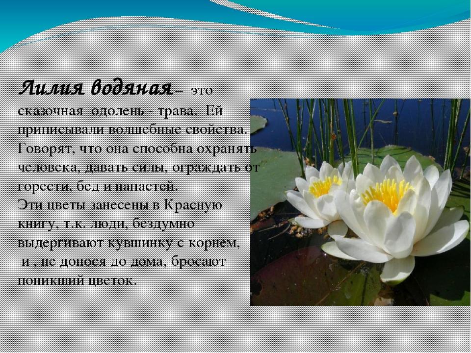 его страница красной книги россии с кувшинкой белой все эти факторы