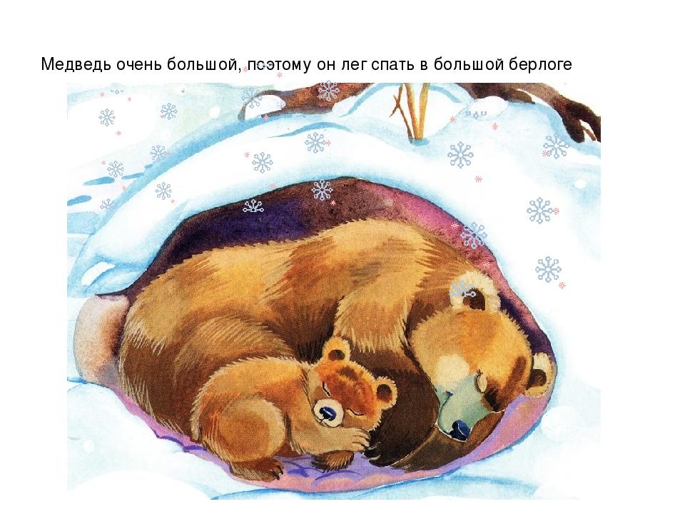 Картинка мишка спит в берлоге зимой