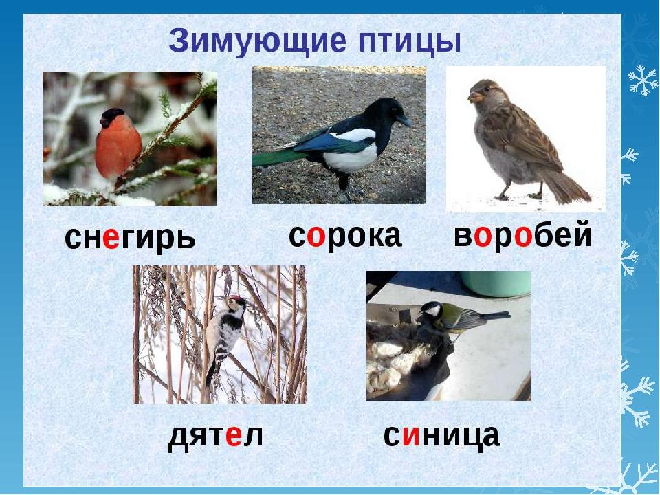 картинки о зимующих птицах для доу