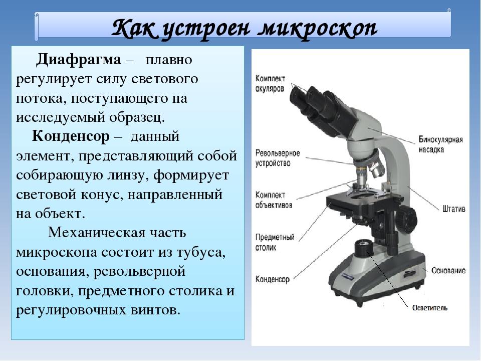 Как появился микроскоп доклад 6356