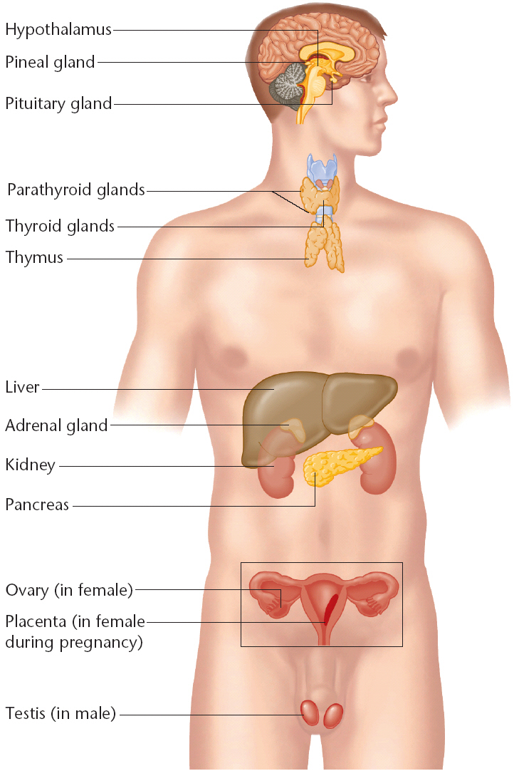 an analysis of the malignancy of the endocrine system and the cancer of the thyroid in medical resea