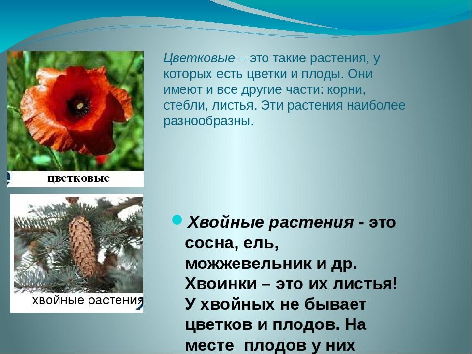 Цветковые – это такие растения, у которых есть цветки и плоды. Они имеют и вс...