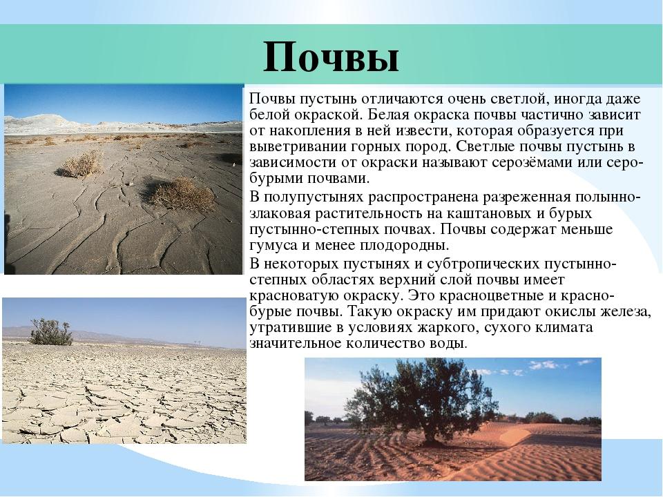 какая почва в пустыни и полупустыни термобелье входит