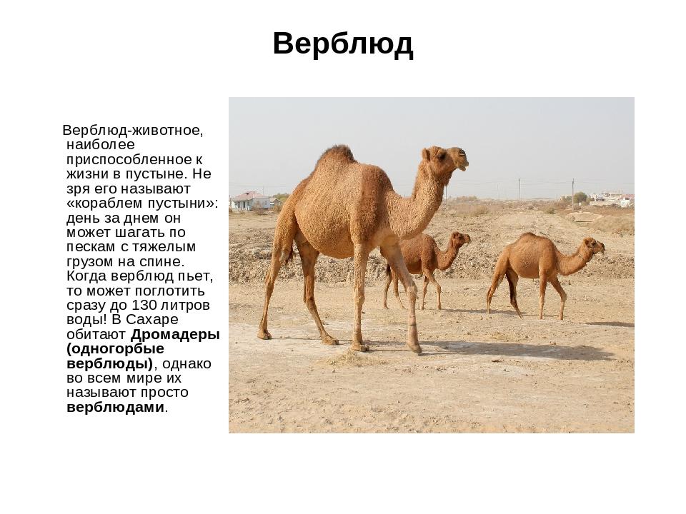 животные пустыни описание с картинками долинский